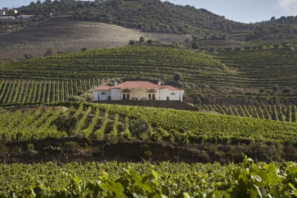 Conheça a Quinta do Bonfim e prove o vinho